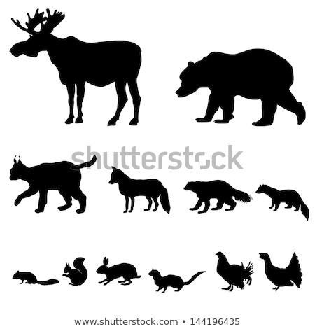 abstrakten · Illustration · wilde · Tiere · Holz · Vektor - stock foto © basel101658