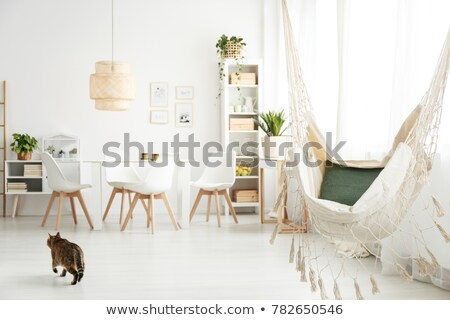 Stock photo: Cat above the chair