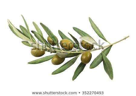 Groene olijven tak olijfolie kom voedsel Stockfoto © Saphira