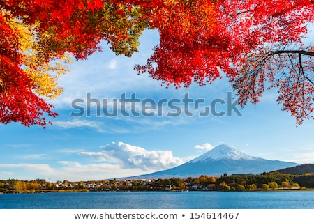 Maple tree and reeds on river Stock photo © Givaga