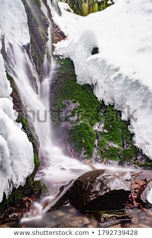 Piccolo muschio primavera natura dettaglio muro Foto d'archivio © Juhku