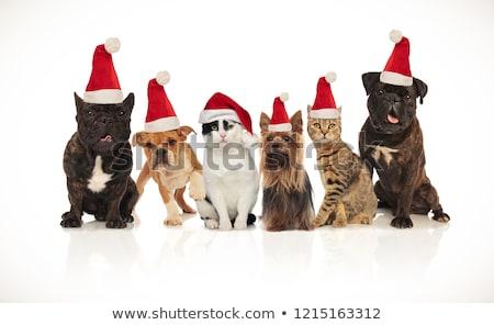 feliz · equipe · seis · cavalheiros · cães · em · pé - foto stock © feedough