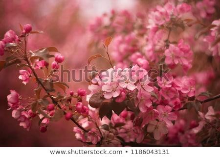 Almafa virág virágok zöld levelek égbolt közelkép Stock fotó © neirfy