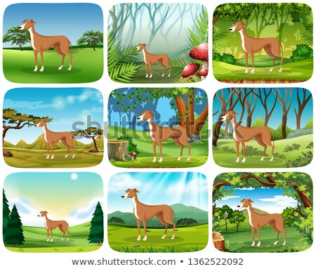 Set of greyhound in different scene Stock photo © bluering