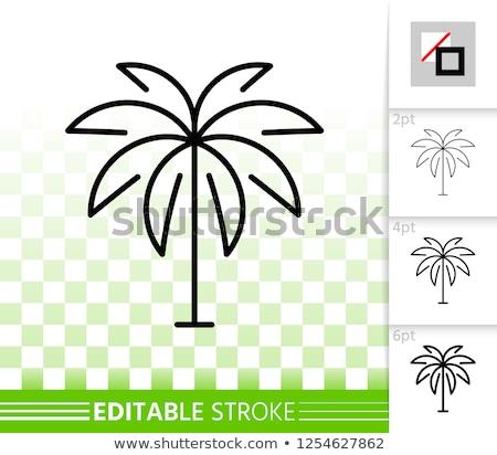 Minimális trópusi tájkép kókuszpálma fa aranyos Stock fotó © ussr