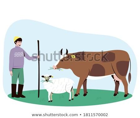 Emberek gazdálkodás tehén birka állatok vektor Stock fotó © robuart
