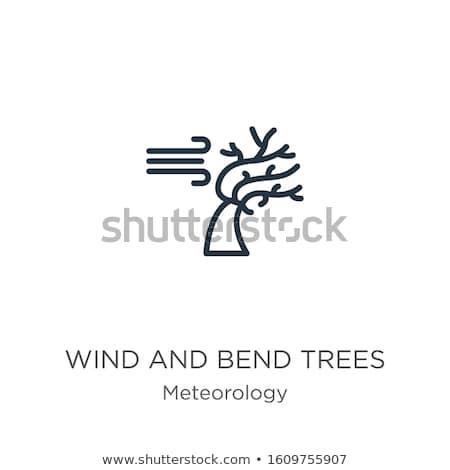 árvore vento linear ilustração isolado ícone Foto stock © Olena