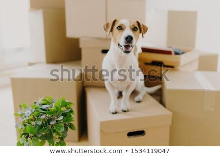 面白い 犬 カートン ボックス 緑 ストックフォト © vkstudio