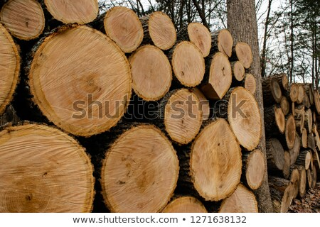 Oak log with brown bark Stock photo © AndreyKr