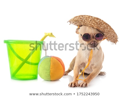 Сток-фото: пляж · портрет · Cute · воды · солнце