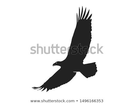 siluet · arka · plan · kuş · siyah · özgürlük · beyaz - stok fotoğraf © perysty