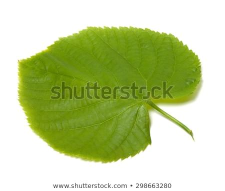 Fresco cal um folha verde completo branco Foto stock © boroda