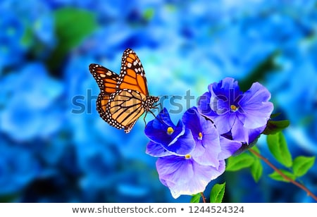 Stock photo: Monarch Butterfly On Flowers