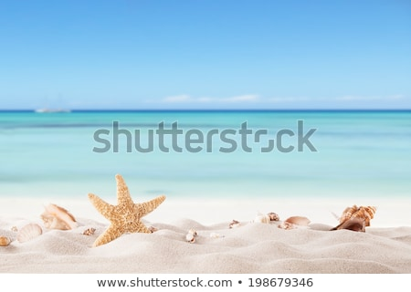 blue summer background with suns and shells Stock photo © marinini