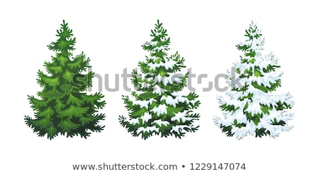 Deux evergreen sapin arbres illustration une Photo stock © adrian_n