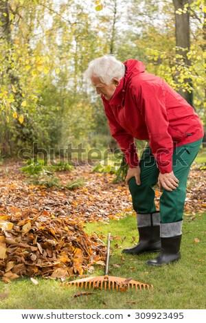 Idős férfi gereblye udvar tart öreg Stock fotó © sframe
