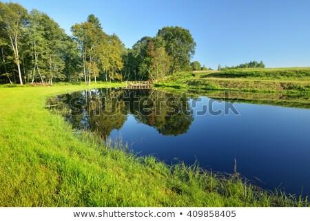 Küçük göl doğal gölet bulutlar orman Stok fotoğraf © Mps197