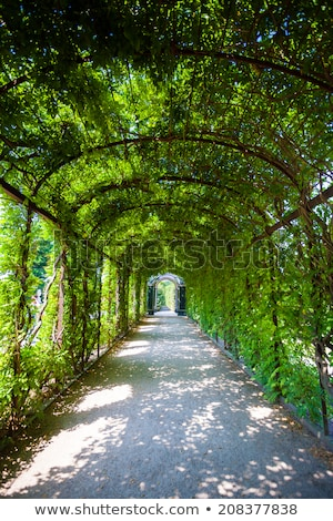 Walkway under a green natural tunnel Stock photo © pixachi