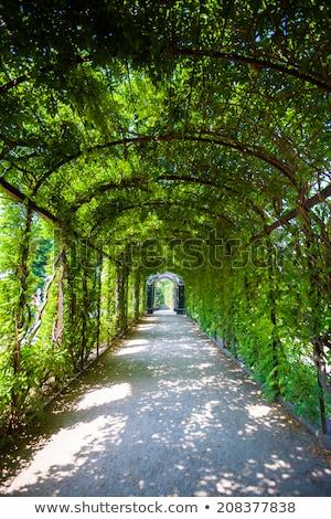vert · naturelles · tunnel · arbre · amour · nature - photo stock © pixachi