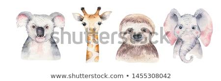 Giraffa foresta fauna selvatica parco turismo safari Foto d'archivio © goce