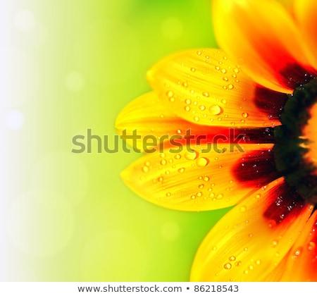 1 ヒマワリ 緑 黄色 自然 葉 ストックフォト © mikhail_ulyannik