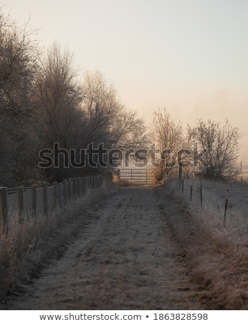 Köd vidék sáv fa természet tájkép Stock fotó © chris2766