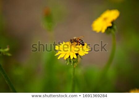 arı · uçan · çiçekler · egzotik · güzel · çiçek - stok fotoğraf © simply