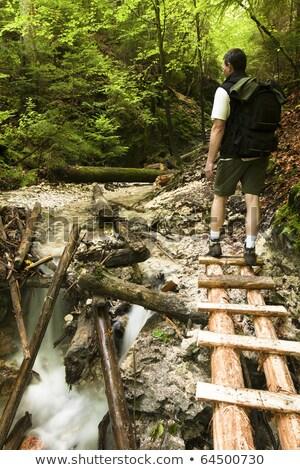 川 ストリーム 歩道橋 フォレスト チェコ共和国 ビーチ ストックフォト © artush