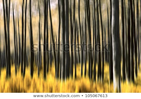 Abstract motion blur of branches background Stock photo © punsayaporn