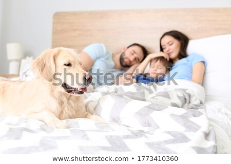 Dog and boy sleeping on the bed Stock photo © bluering