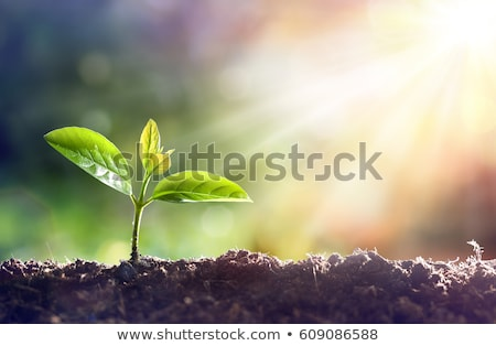 jóvenes · plantas · creciente · esquina · concretas - foto stock © Kidza
