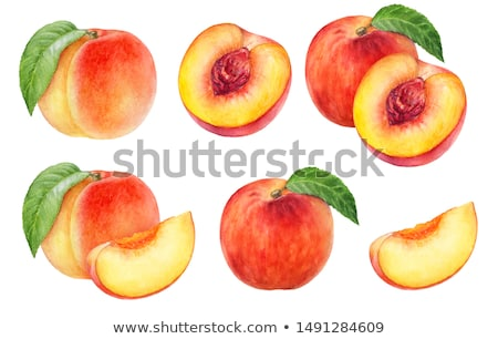 Watercolor illustration of peach Stock photo © Sonya_illustrations