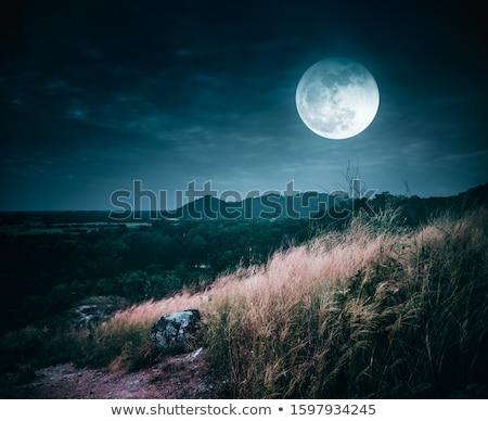 Ay ışığı ağaçlar gece ağaç siluet fikir Stok fotoğraf © IS2