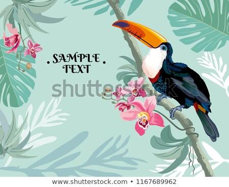 vettore · illustrazione · uccello · chitarra · acustica - foto d'archivio © articular