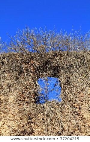 grunge · muro · finestra · vecchio · intemperie · verniciato - foto d'archivio © lunamarina