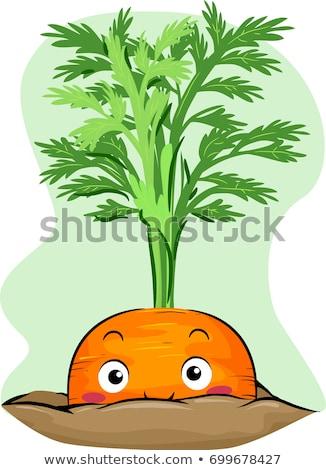 Peeping Carrot Mascot Illustration Stock photo © lenm
