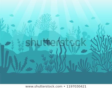 Sea animals swimming under the ocean Stock photo © colematt
