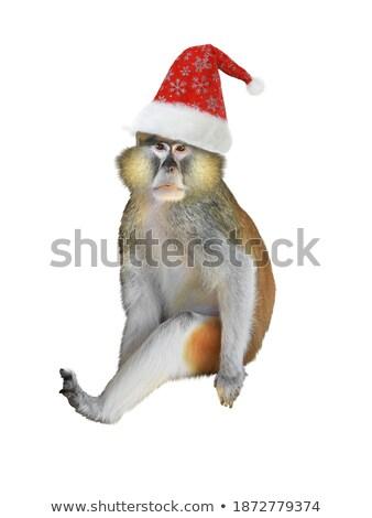 aranyos · majom · piros · sapka · mikulás · izolált - stock fotó © Lady-Luck