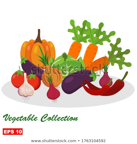 Canned Zucchini and Tomatoes Vector Illustration Stock photo © robuart