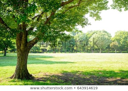緑 晴れた 公園 木 草 木材 ストックフォト © vapi
