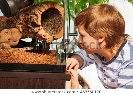 Boys watching reptiles in the terrarium Stock photo © galitskaya