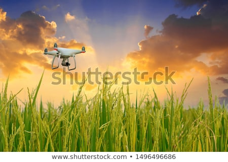 The drone is flying over the rice field. The flight of a quadrocopter Stock photo © galitskaya