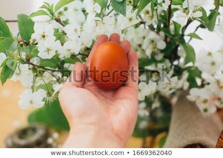Wielkanoc karty czerwony żółte kwiaty dekoracyjny easter egg Zdjęcia stock © Artspace