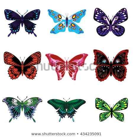 Dokuz kelebek afiş örnek arka plan sanat Stok fotoğraf © colematt
