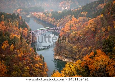 Primo ponte fiume Giappone autunno caduta Foto d'archivio © vichie81