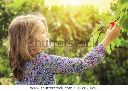 Photo stock: Cute · fille · cerises · jardin · arbre