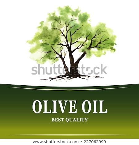 Farbe Landwirtschaft frischen Olivenbaum Zweig Tinte Stock foto © pikepicture