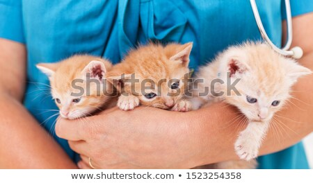 Cute kitten at the veterinary - close up, shallow depth Stock photo © ilona75