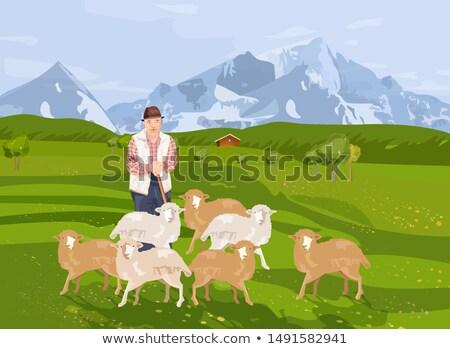 Eski çiftçi koyun vektör manzara dağlar Stok fotoğraf © frimufilms