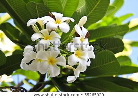 花 · 青空 · 花 · テクスチャ · 自然 · 葉 - ストックフォト © beemanja